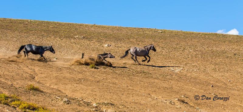 Rushing Mustangs-1aa.jpg