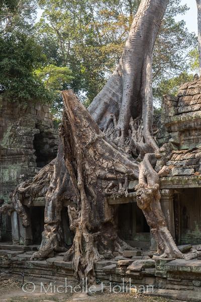 Preah Khan Temple, Angkor Park, Siem Reap, Cambodia