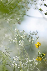 Spring flowers in a meadow