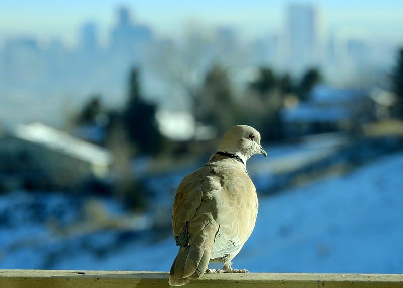 birds (200).JPG