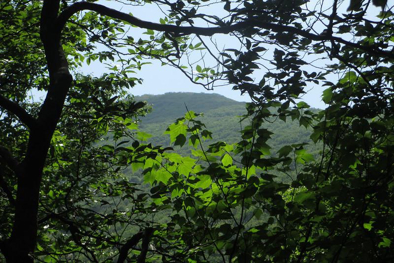 Mountains-to-Sea Trail (5,480')