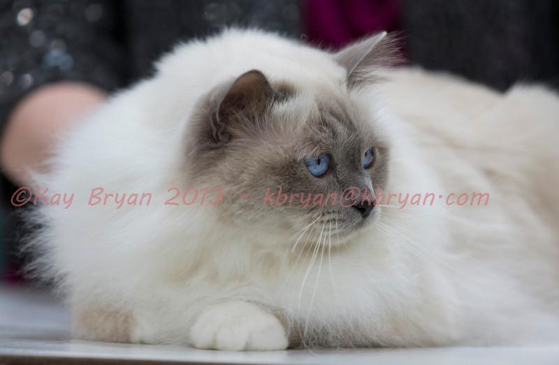 CatShow2014124.jpg
