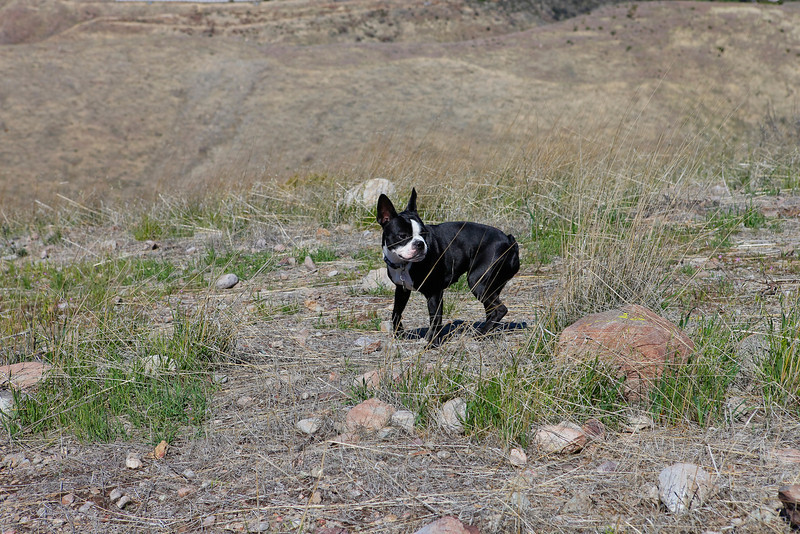 dogs_vasquez_055.jpg