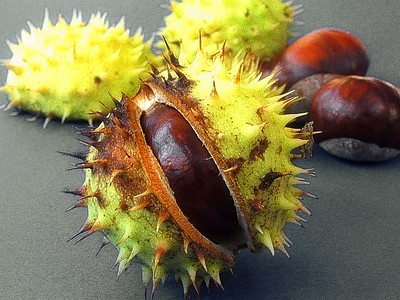 Chestnuts - castagne