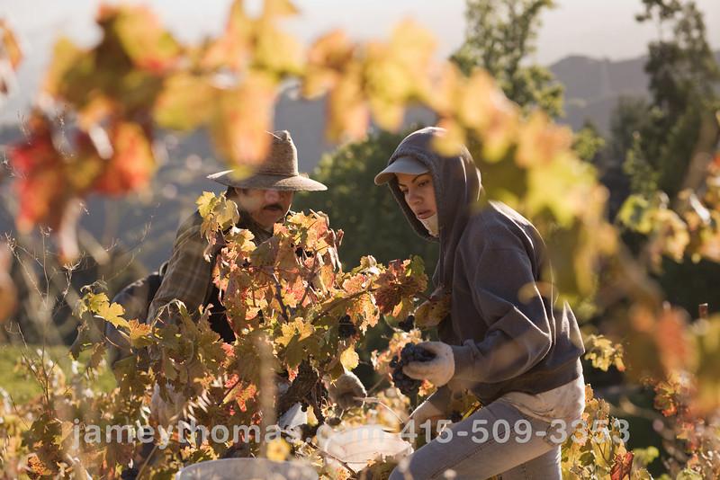 90930_Ridge_Harvest_235.jpg