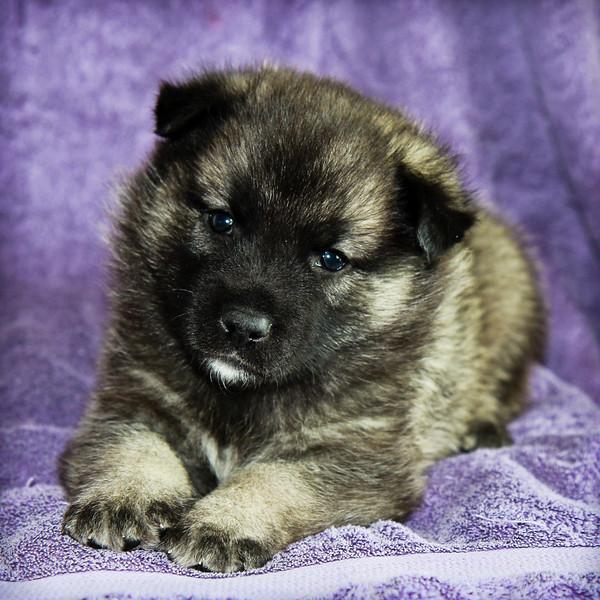 2014-03-23 4-week old pups