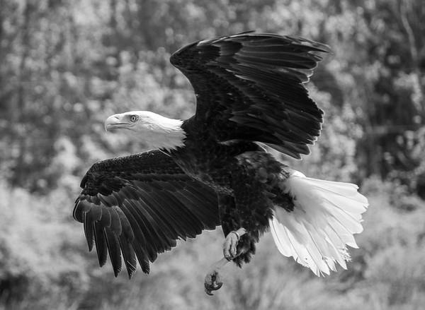 Canadian Raptor Conservancy 2019-05-26