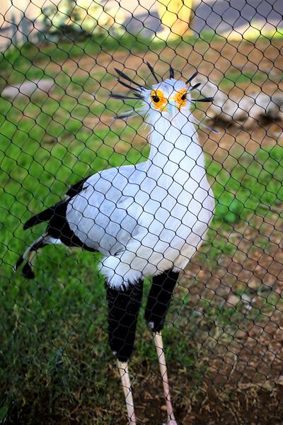 Secretary Bird Cage.jpg