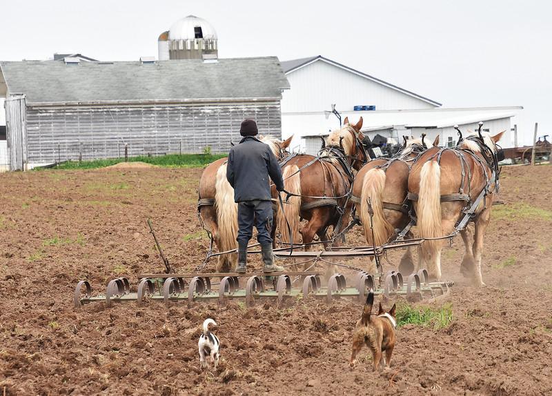 06 Amish-Field plowing -Dalton Wi -Roper.jpg