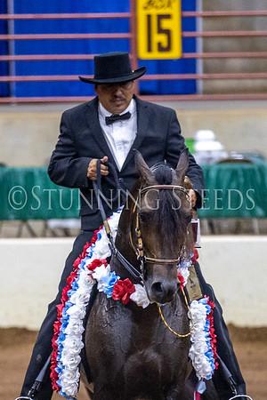 165 Fino Stallions/Colts Championship