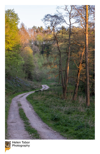 Aldfield walk 24 Apr 2020-22 framed.jpg