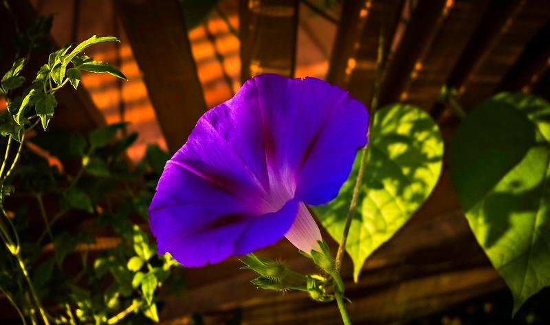 The Magic of Light-168.jpg