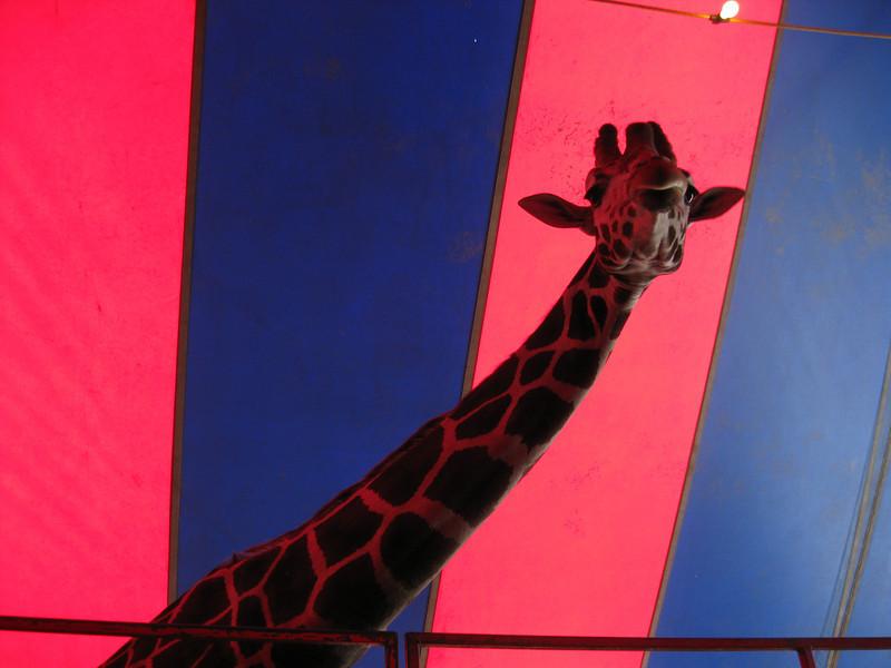 Two giraffes were in attendance at the free Giraffic Park exhibit.