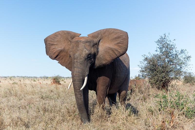 Africa - 102016 - 7860.jpg