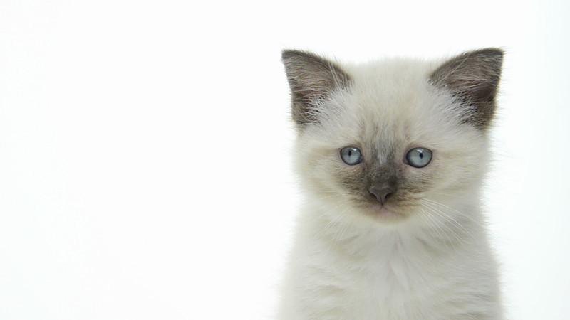 Kitten_06_IS_HD.mov