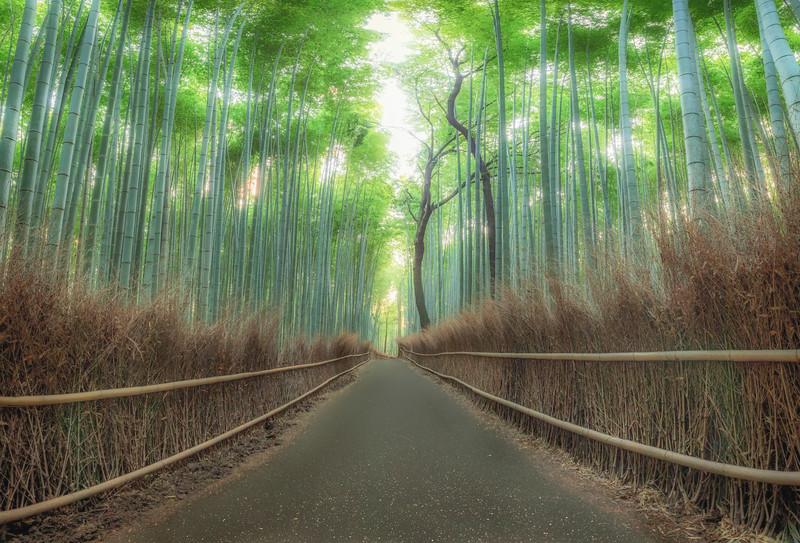 Arishiyama Bamboo Forest, Kyoto