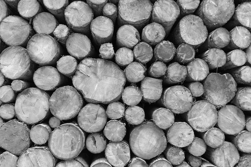 Logs - San Lorenzo in Banale, Trento, Italy - January 2, 2015