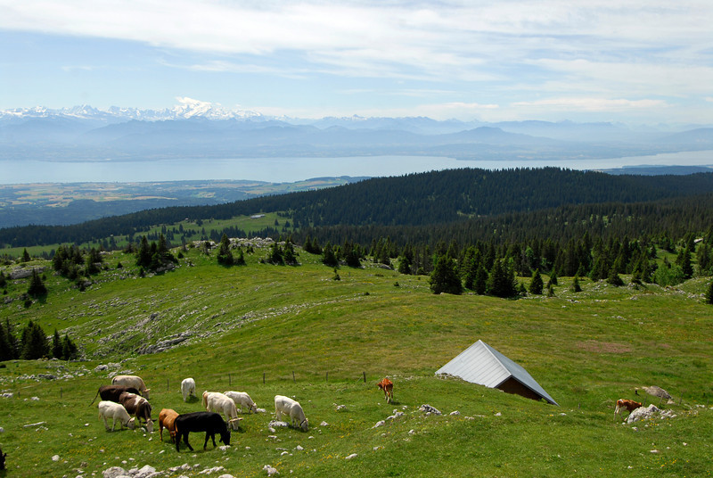 070626 7284 Switzerland - Geneva - Downtown Hiking Nyon David _E _L ~E ~L.JPG