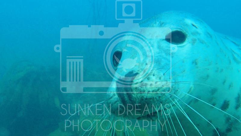 Lundy Island Edit.Still084.jpg