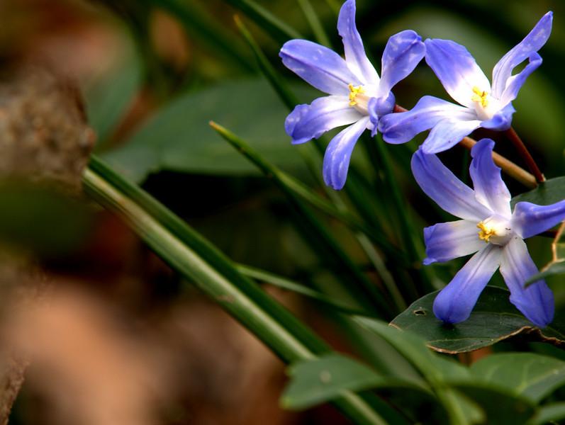 flowers sayen 3.jpg
