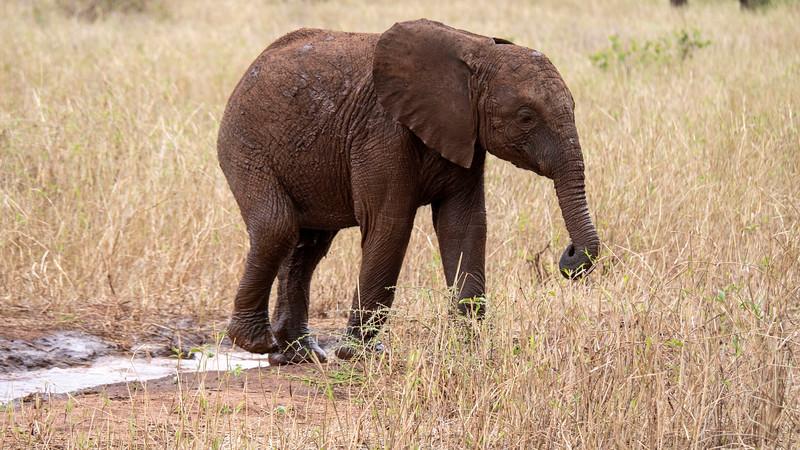 Tanzania-Tarangire-National-Park-Safari-Elephant-17.jpg