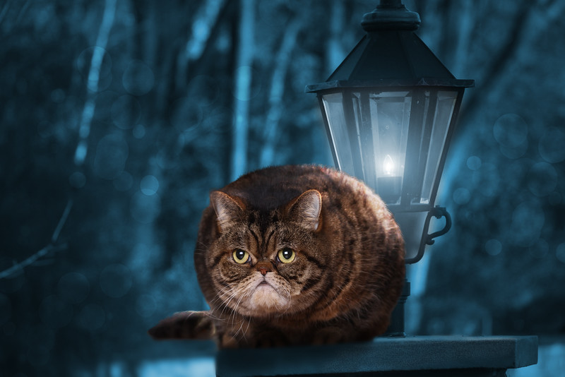 Lachine-cat-5.jpg