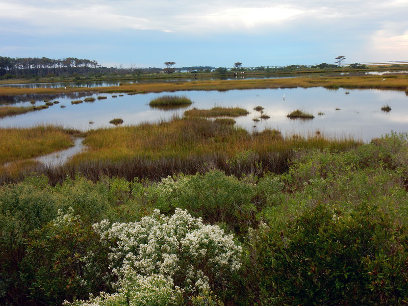 Wetlands of the Assateague National Seashore