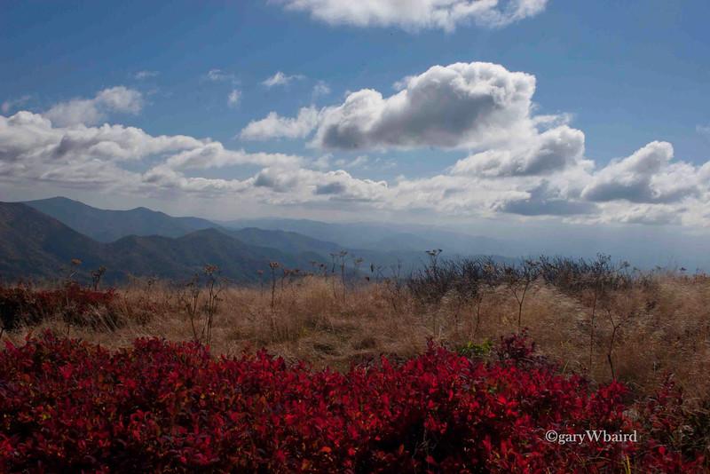 Roan Mountain Reds