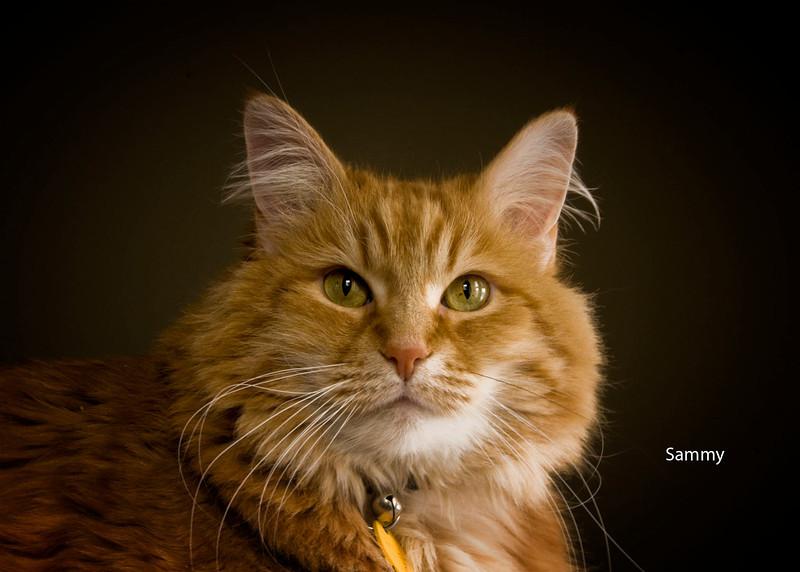 Sammie- Roper's cat .jpg