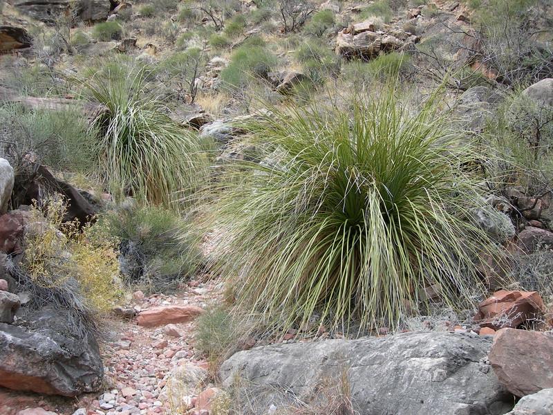 (2005 January 18-20) Hermit Trail to the Granite Rapids.  GCNP, Arizona.