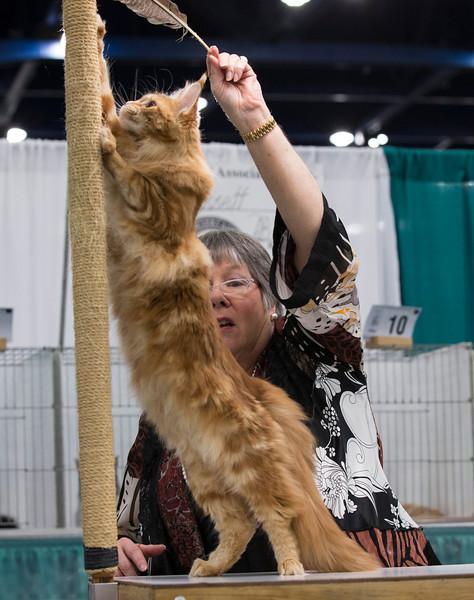 CatShow2014189.jpg