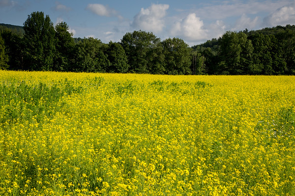 Field near Bridgewater