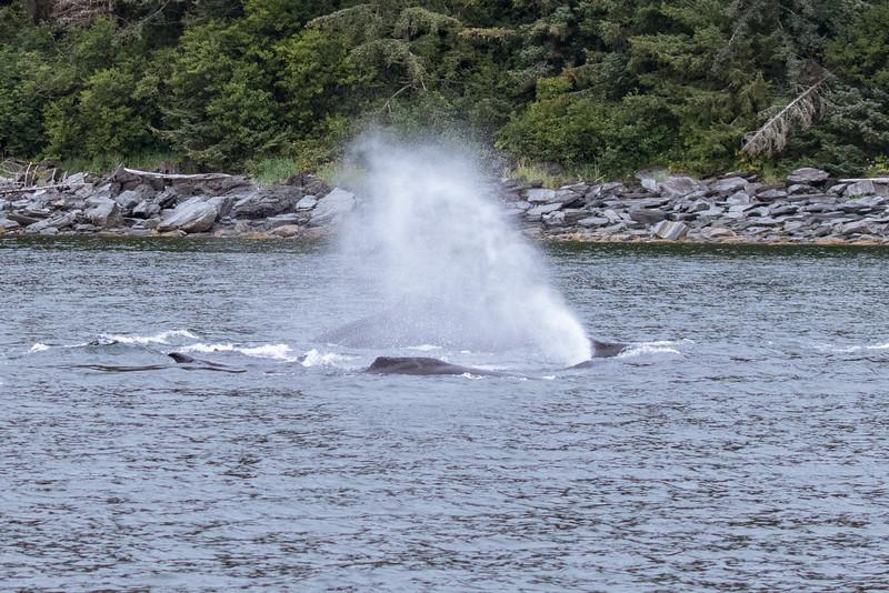 Alaska 2015 - Juneau -  072615-122.jpg