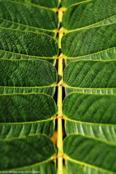 Macro-Green Leaves3.jpg