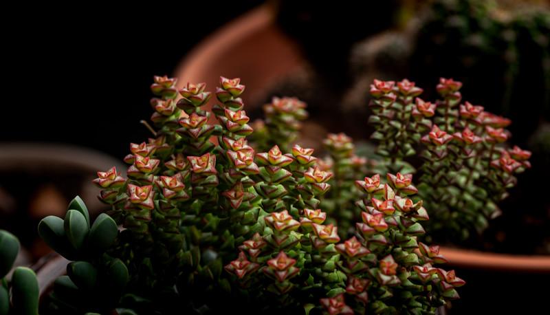 succulents 051620-3159.jpg