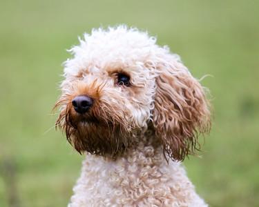 Dog Portrait Shoot - Beth Mounsey