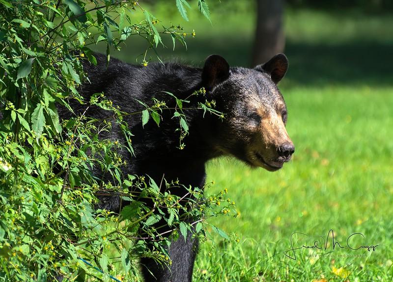 bear2-0032.JPG