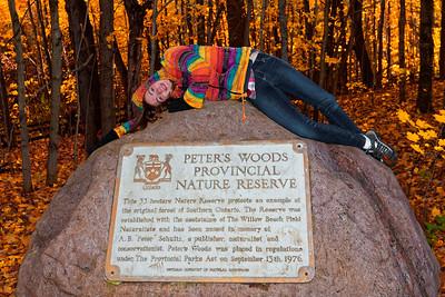 Peter's Woods