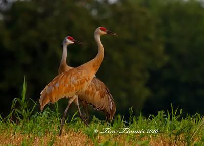 Indiana Wildlife