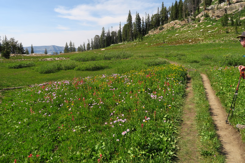 Wildflowers in Alaska Basin