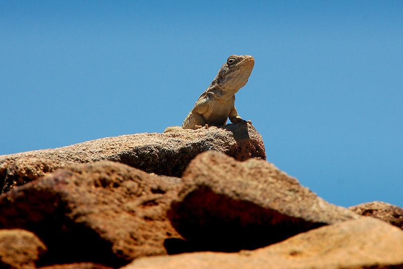 Madagascar, Fauna & Flora 19 Oda.jpg