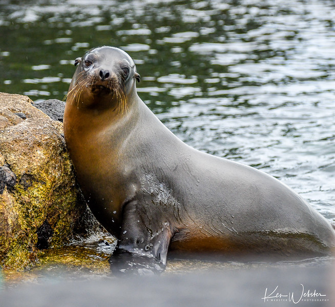 2018 Lobos Island-15.jpg