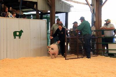 2020 Sheridan Co. Fair Swine Show
