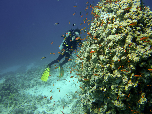 Paul's Pics - Diving Sharm El Sheik - Sept 2010