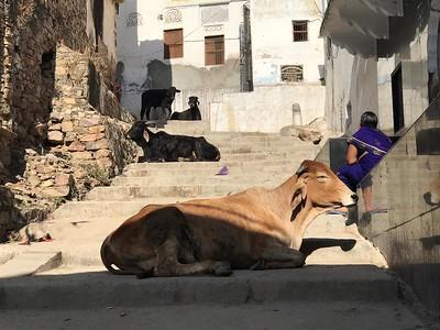 India North Jan 2019