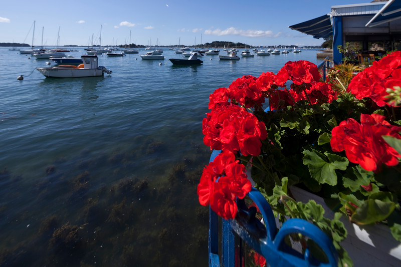 Flowerpot of geraniums, Arradon point, departament of Morbihan, Brittany, France