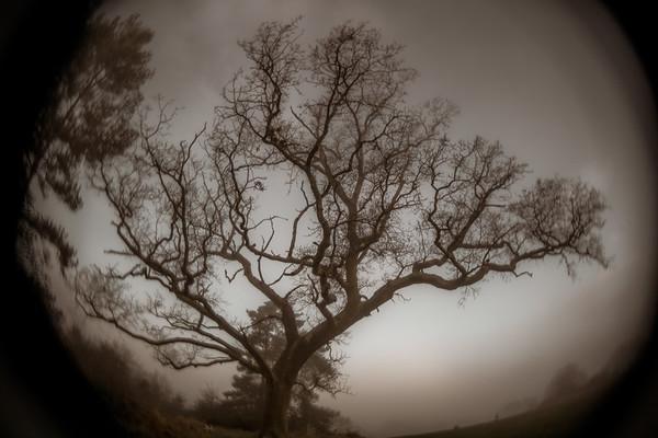 Aged Tree
