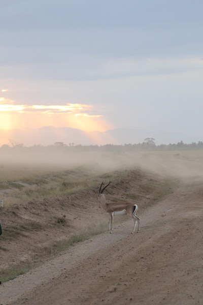 Kenya 2019 #2 1625.JPG
