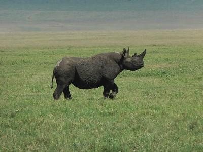 Ngorongoro Highlands Tanzania