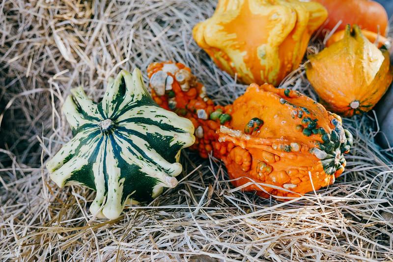 assorted pumpkins 4 (1 of 1) copy.jpg